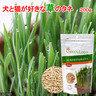 GREEN Labo 燕麥草種子(貓狗適用)