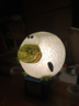 動物燈 - 青蛙 (28cm x 28cm x 28cm) - 18B0356