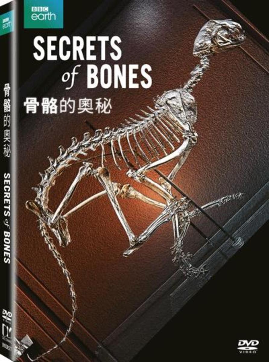 骨骼的奧秘