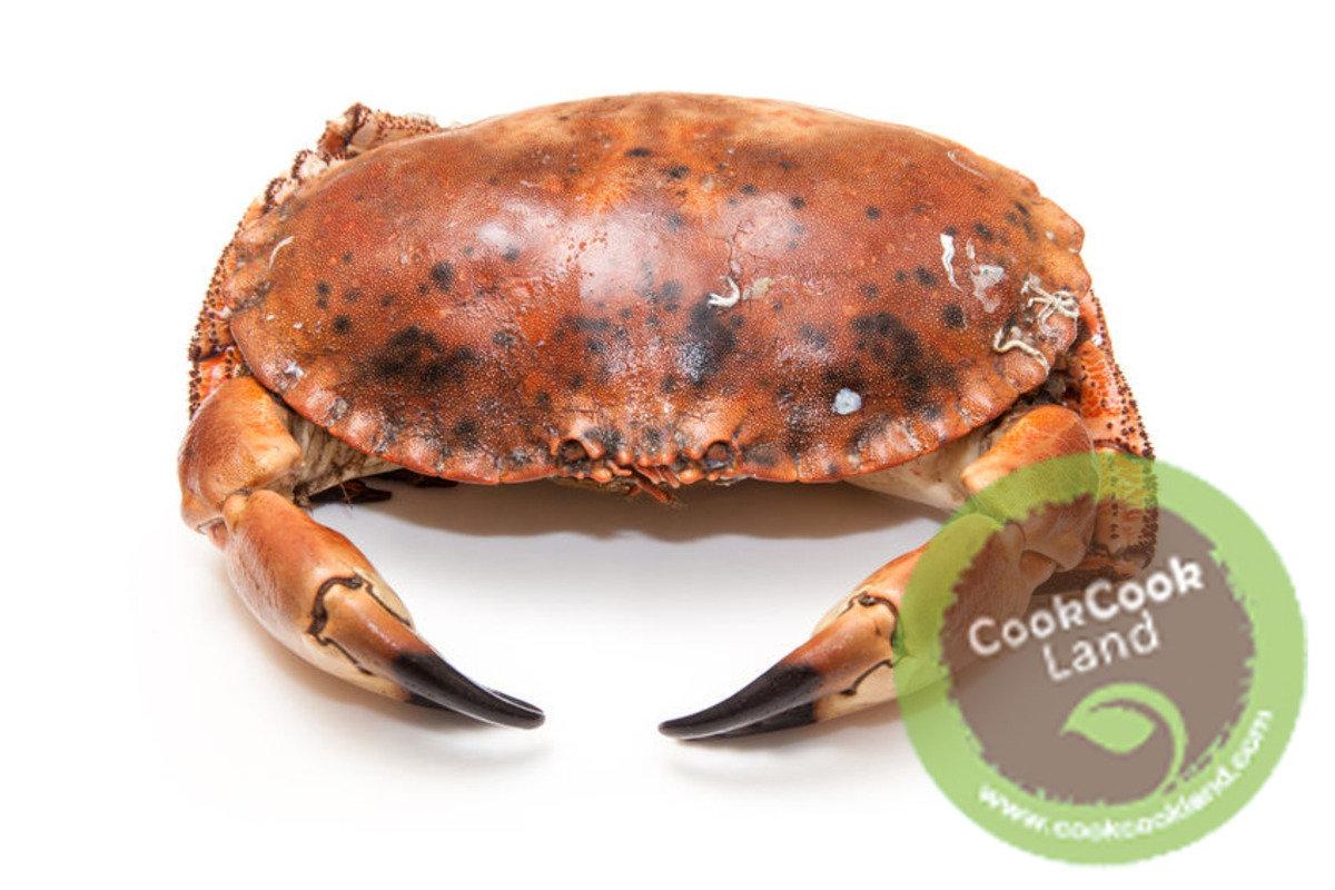 愛爾蘭麵包膏蟹(600g-800g)