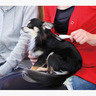 長毛貓犬專用有柄軟針梳(小)(W23878)