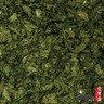 礁岩野生海藻