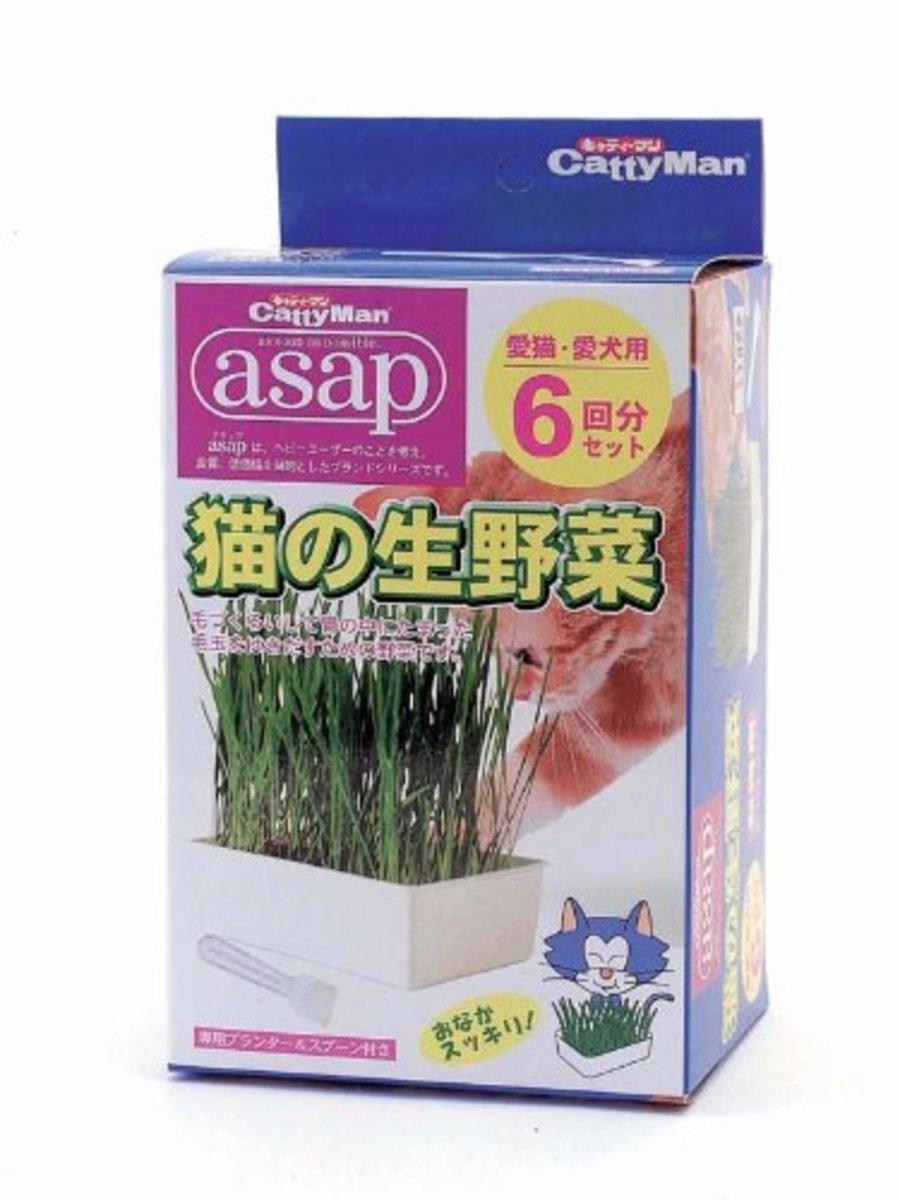 日本 CattyMan 貓貓種草 2次用裝