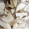 象牙椰子片(100g/樽)