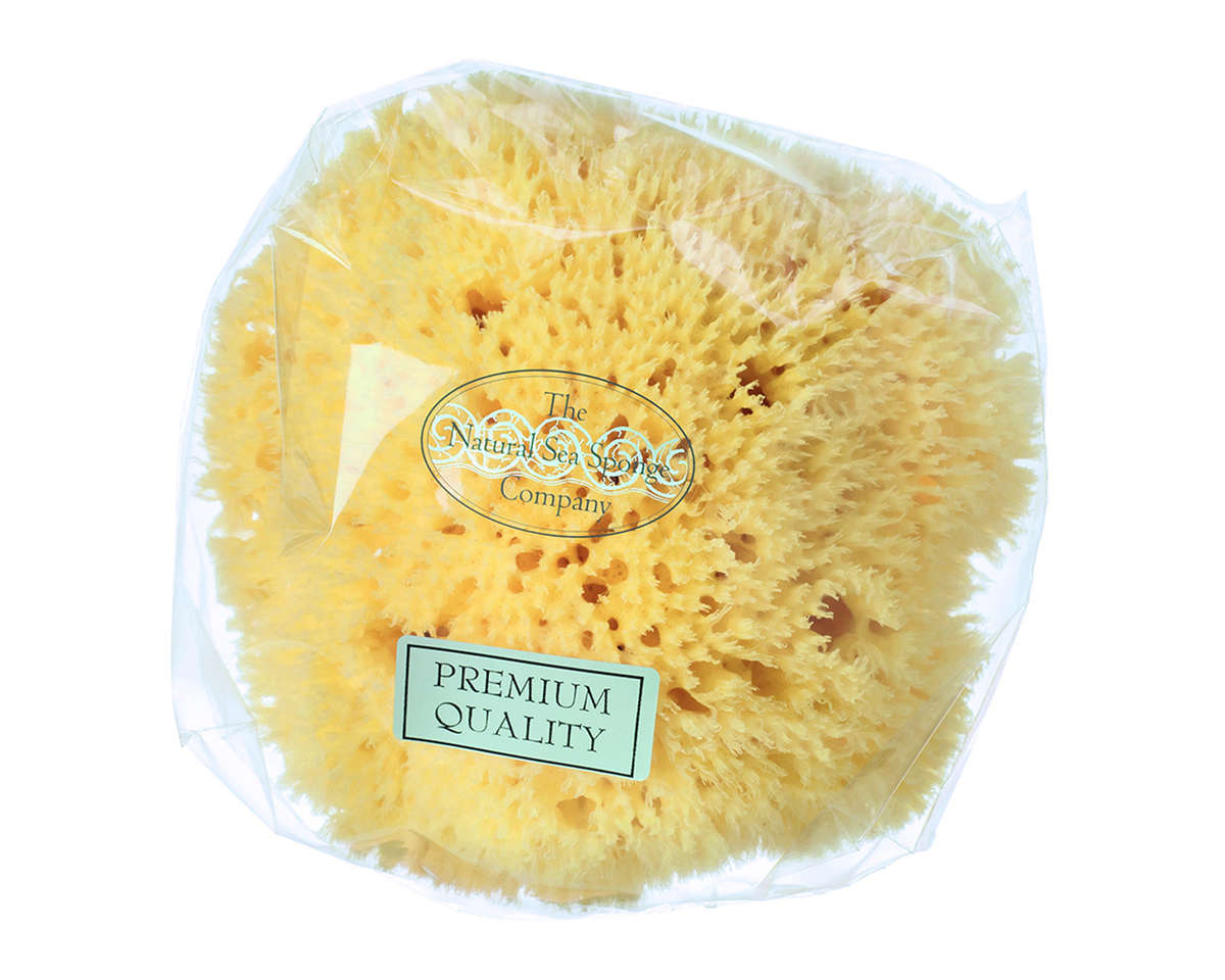 Honeycomb Sea Sponge 6-6.5''