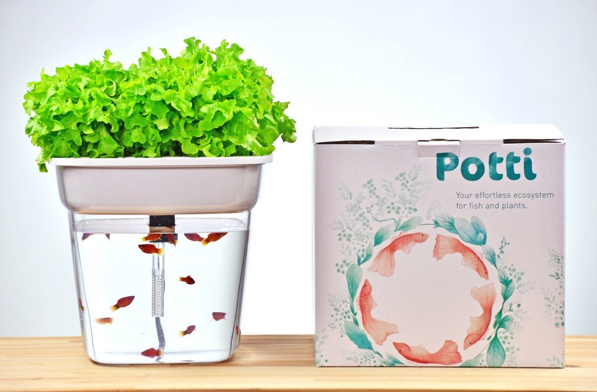 Potti - Desktop Aquaponics System (Bundle Package)