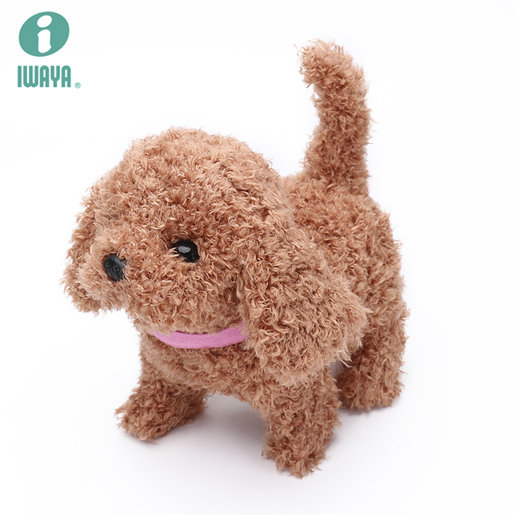 Middle Size Dog Toypoodle